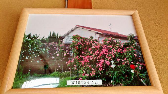 バラの写真1