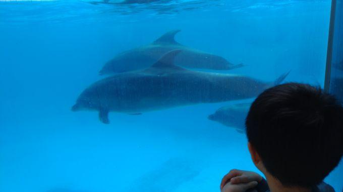 イルカのサービス2